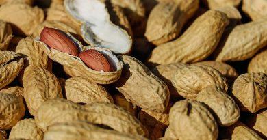 peanut allergy prevention