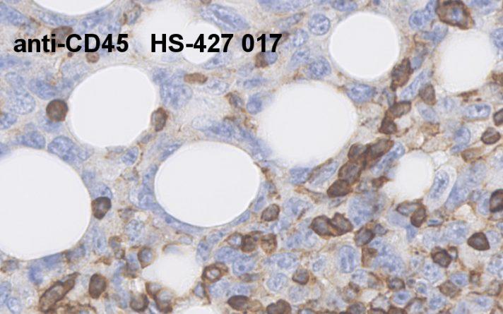 anti-mouse CD45 antibody monoclonal rat purified