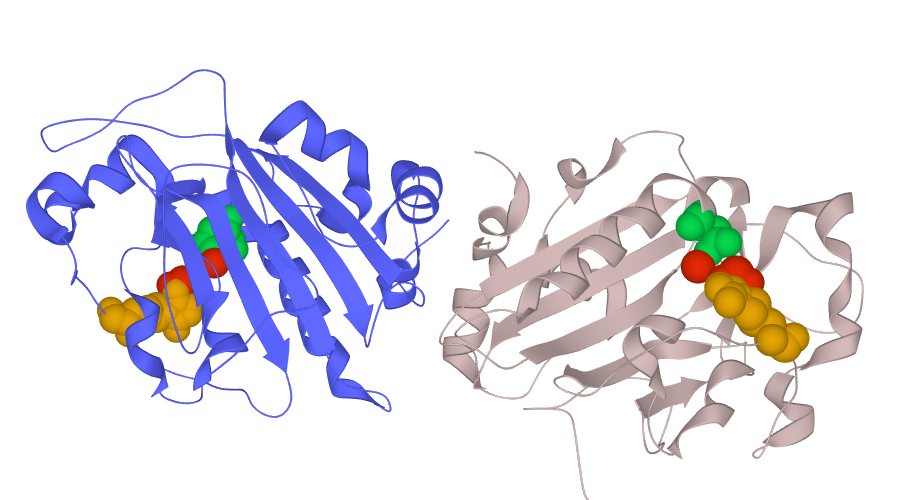 nonspecific endonuclease isolated from Serratia marcescens